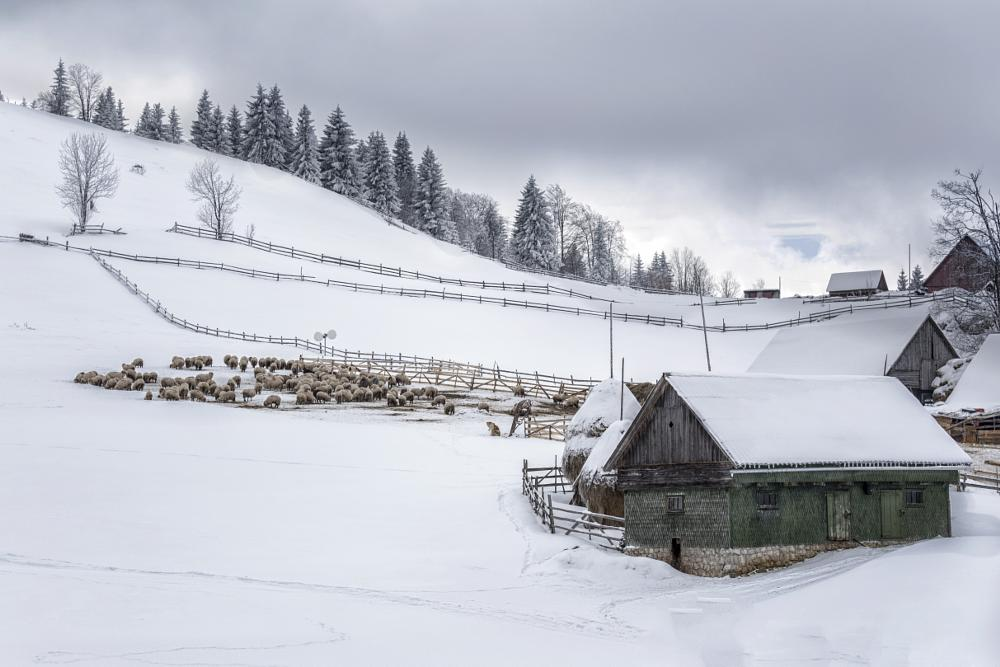 Photo in Rural #rural #village #sheep #winter #snow