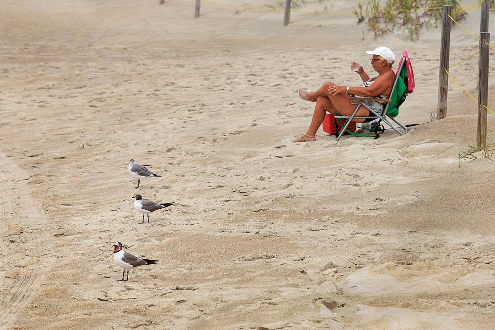 Photo in Journalism #beach #seagulls #birds #sand #summer