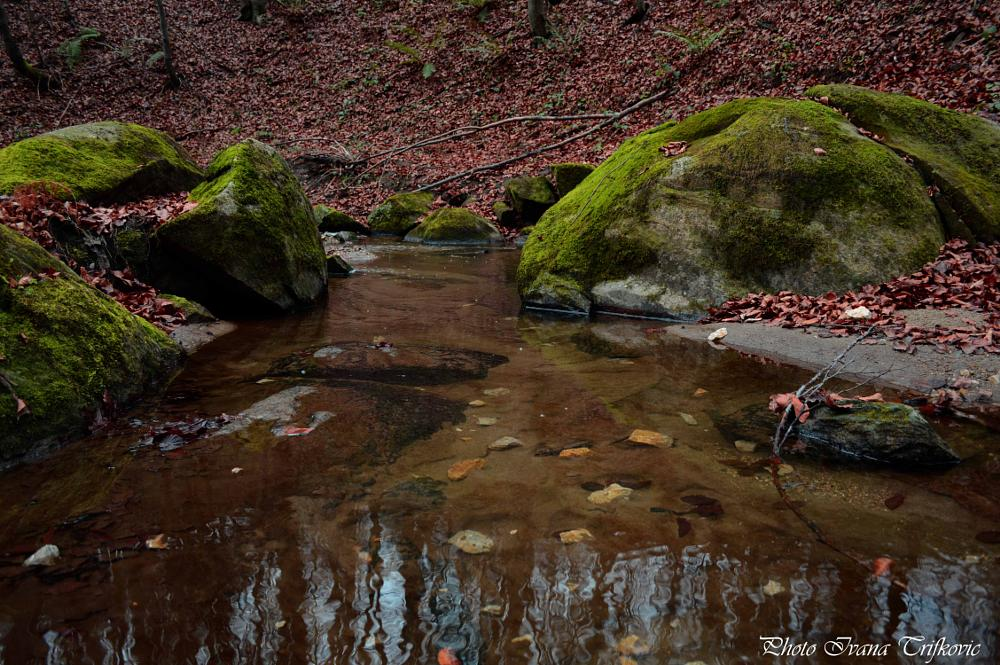 Photo in Landscape #water #rocks #nature #river #wild nature #forest #west serbia #village nature