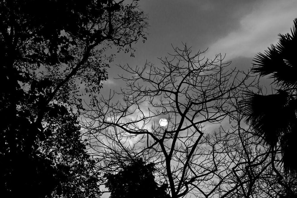 Photo in Landscape #b/w #sun set #black