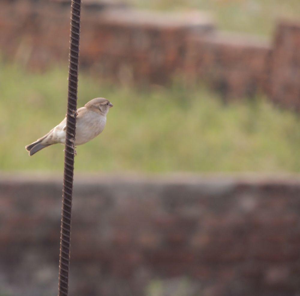 Photo in Animal #sparrow #city #rod #evening