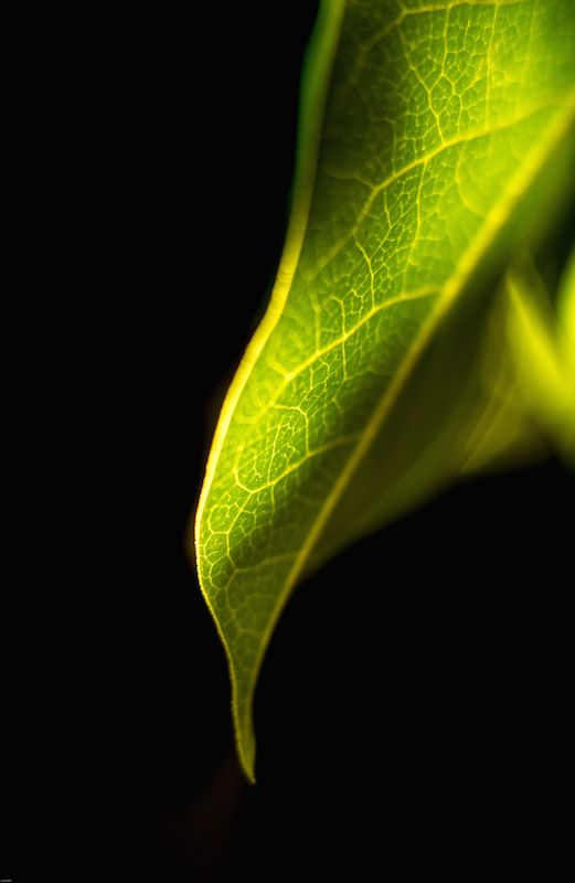 Photo in Abstract #leaf #tree #macro #close up #nature #foilage #abstract