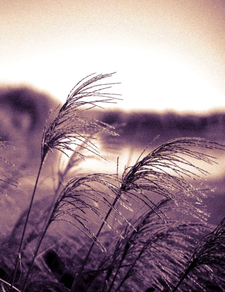 Photo in Black and White #disneyland paris #split toned #duo-tone #lake #water #reeds #nature #floral #flora #landscape