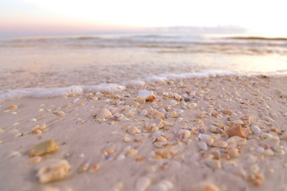 Photo in Nature #shells #beach #waves