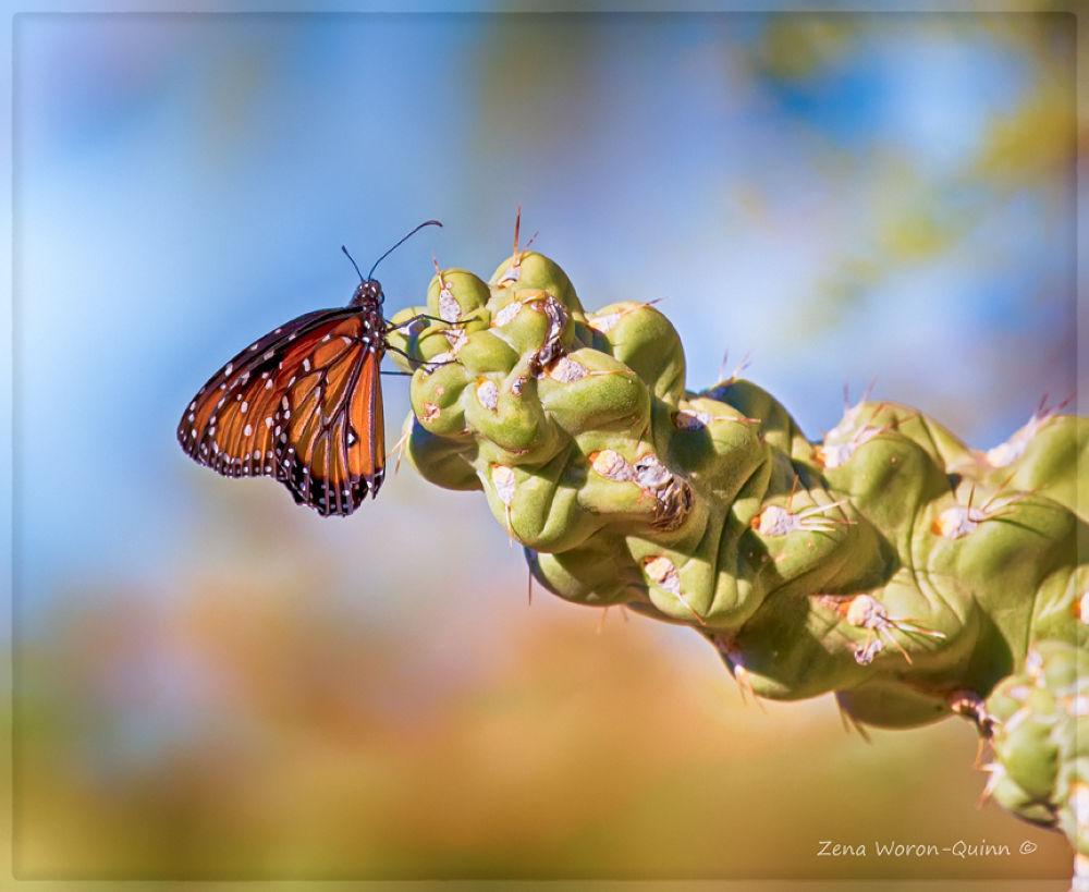Photo in Nature #buutterfly #phoenix #arizona #usa #cactus #close up