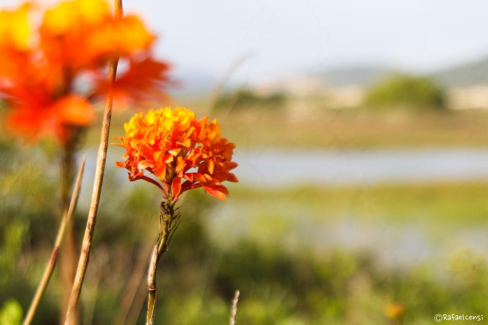 Photo in Nature #nature #joy #rafael censi #floripa #flowers
