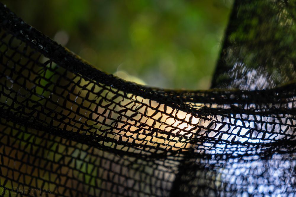 Photo in Abstract #net #nature #abstract #river #trees #green