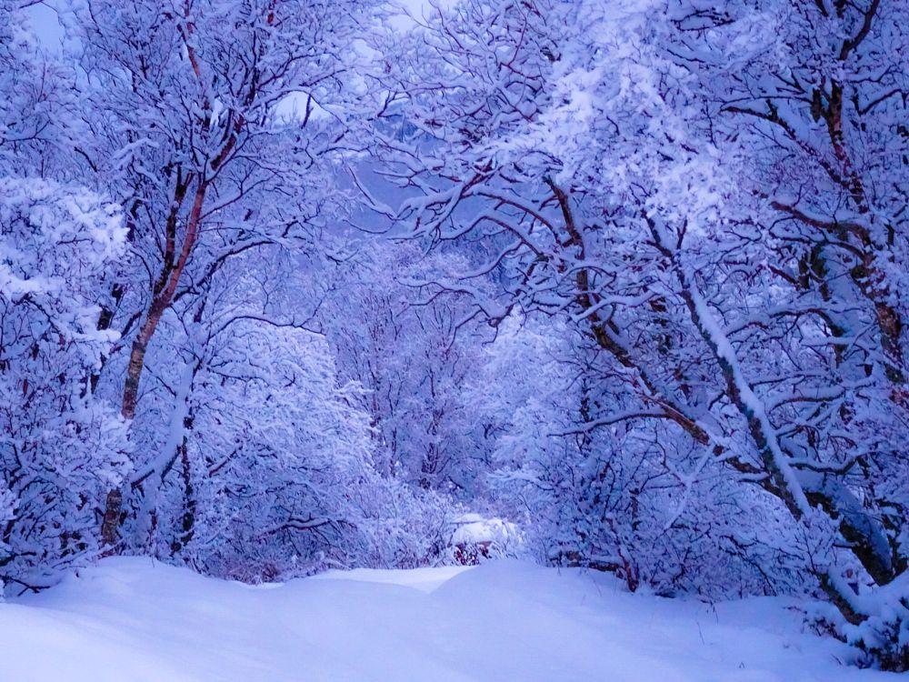 Photo in Landscape #forest #trees #snow #winterlight #northofnorway #norway #winter #joy