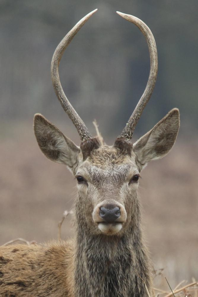 Photo in Animal #antler #deer #richmond park
