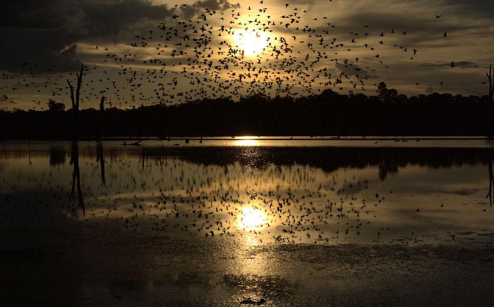 Photo in Landscape #birds #landcsape #clouds #water #trees