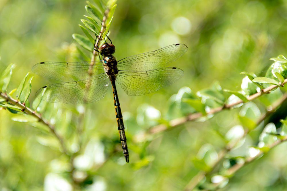 Photo in Macro #dragonfly #delicate #macro #nature
