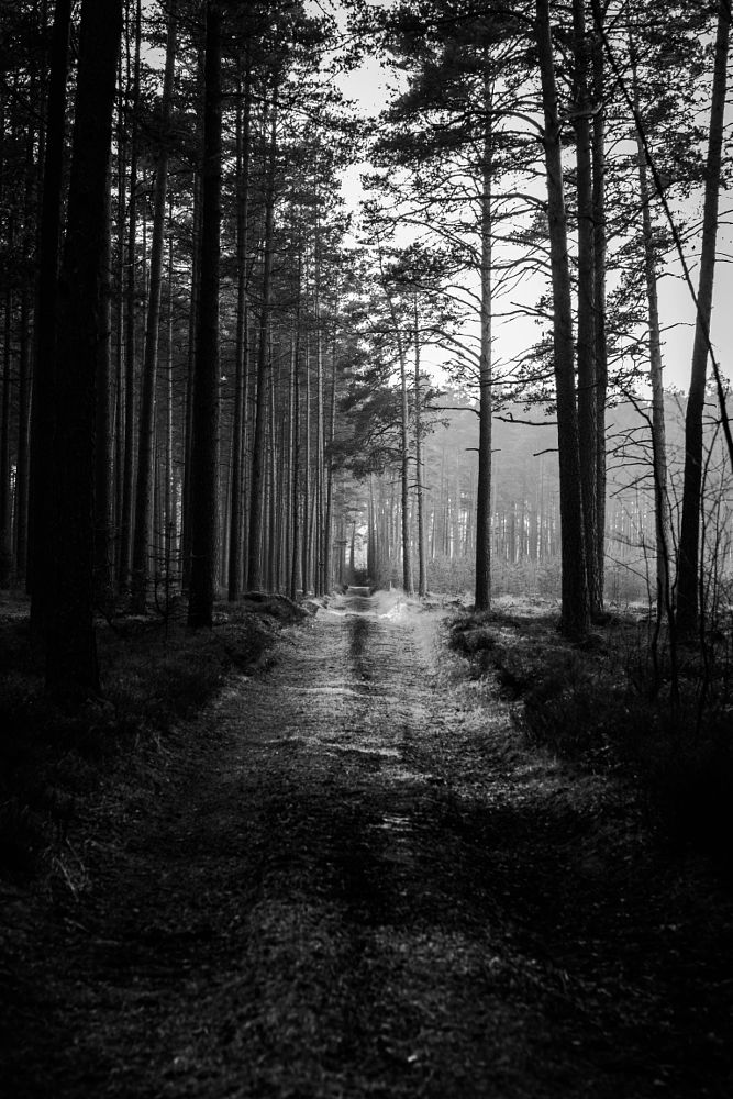 Photo in Black and White #forest #peac #darkness #black&white #woods