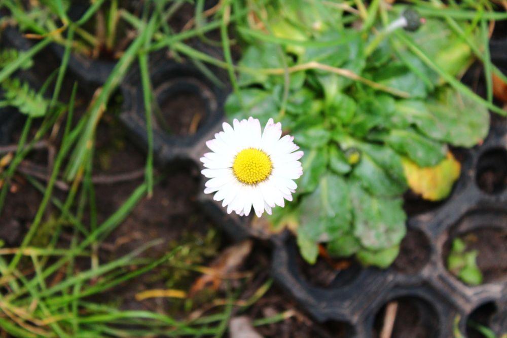 Photo in Random #white #green #flower #park #london