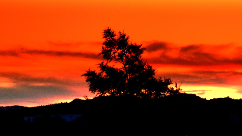 Photo in Landscape #good night from bodrum #bitez #my garden #bodrum #sunset #close up