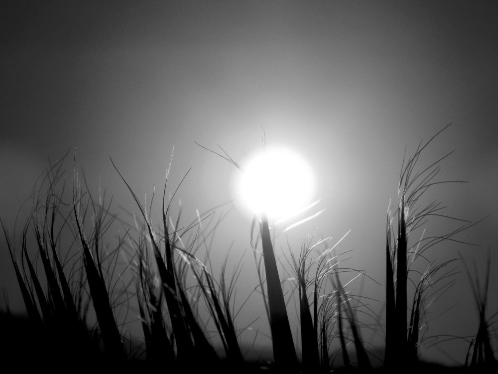 Photo in Black and White #sunset #b&w #bitez #my garden #bodrum #close up