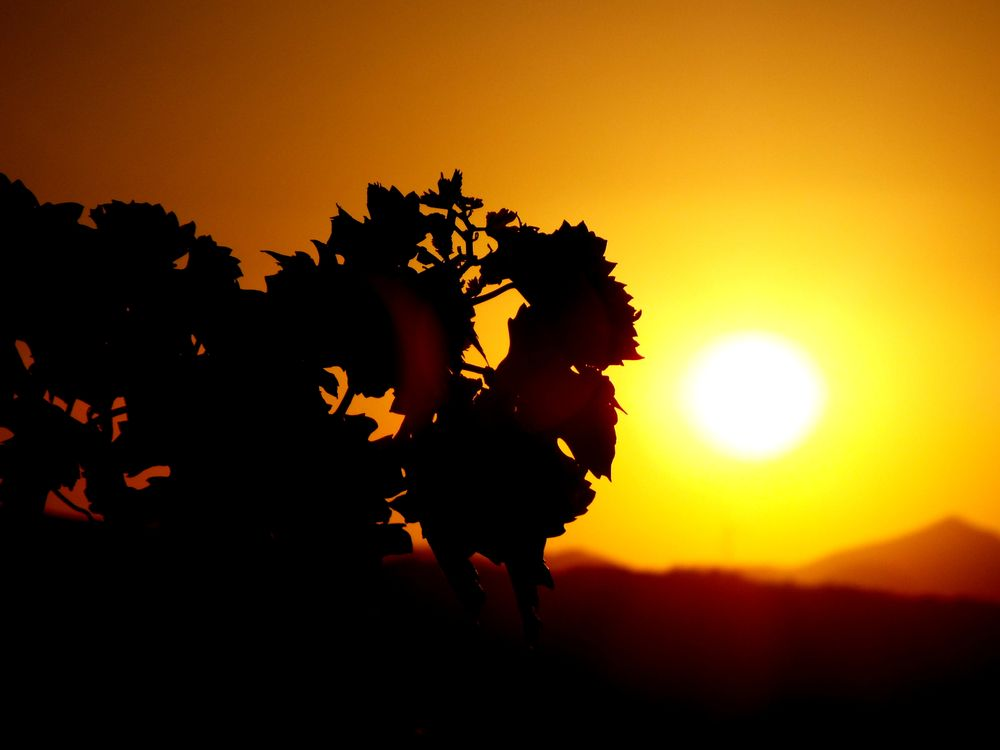Photo in Macro #extra ordinary sunset 5 #bitez #my garden #bodrum #mugla #turkey #close up