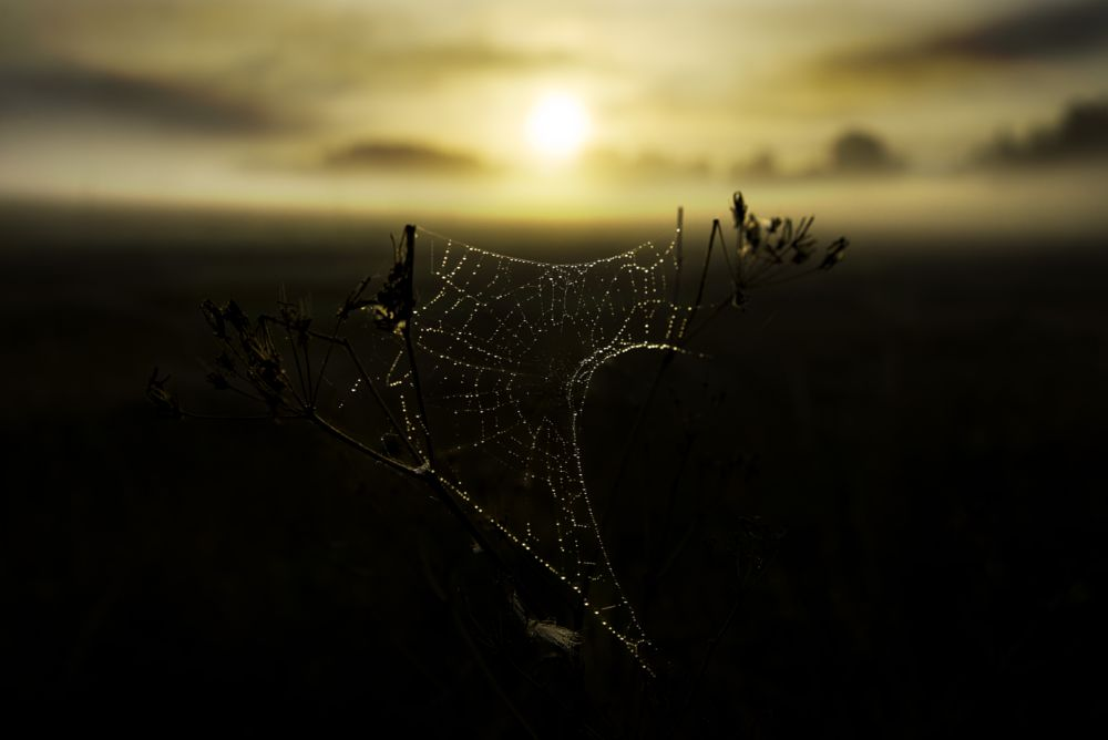 Photo in Nature #cobweb #sun #sunrise #dawn #backlight #spider net #sunshine #mist #autumn #autumn morning #sweden #scandinavia #field #morning light #morning #outdoor #colorful