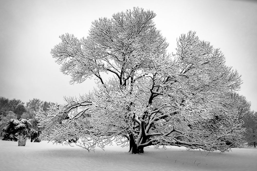 Photo in Black and White #snow #winter #storm #b&w