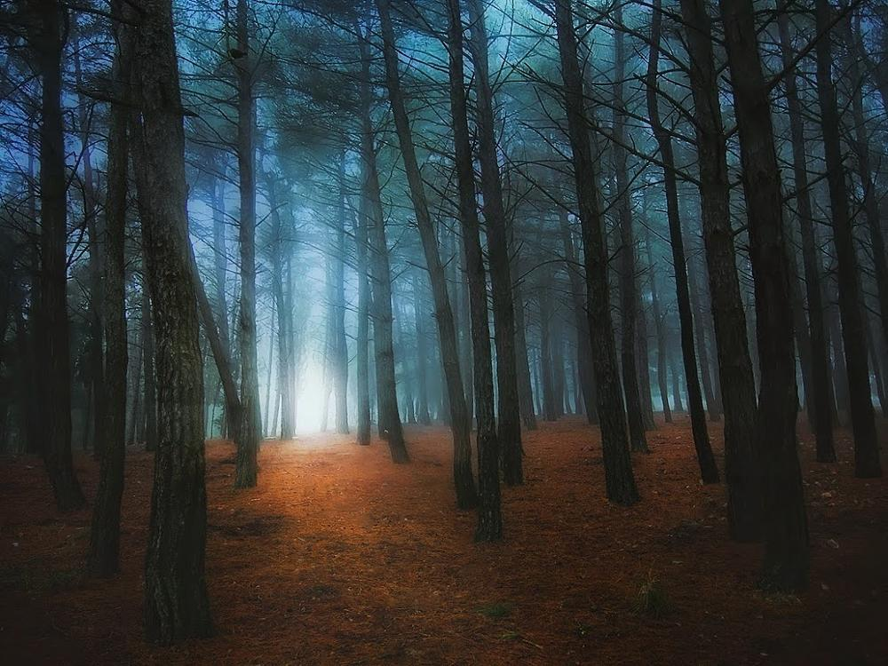 Photo in Landscape #path #forest #light #shing