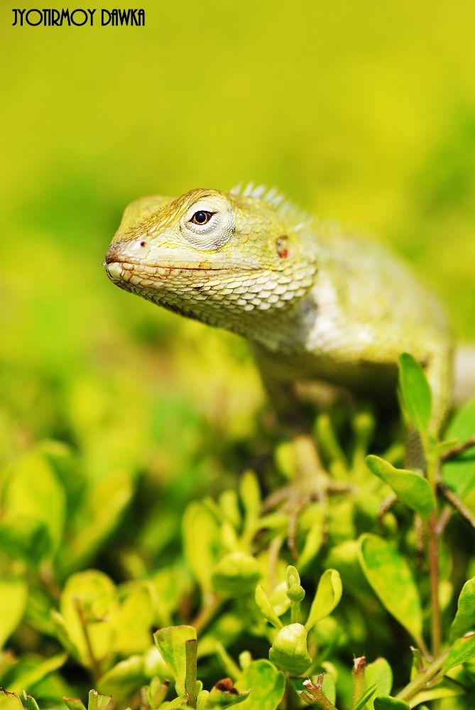 Photo in Animal #yosuke ito #mubi.a #citrum #paolok.5 #jeffwhite11