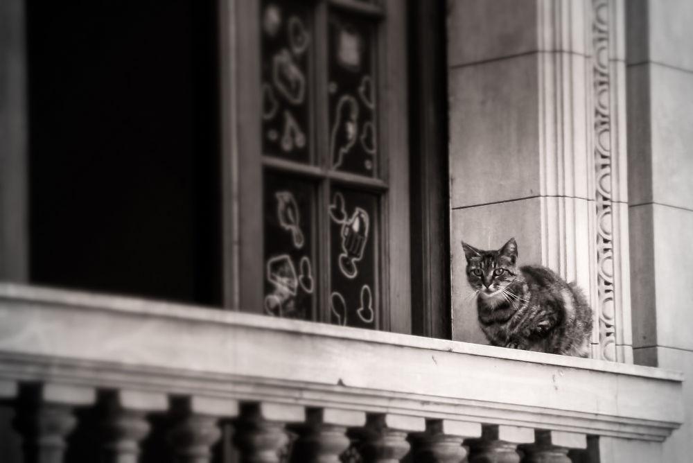 Photo in Animal #cat #kitten #kitty