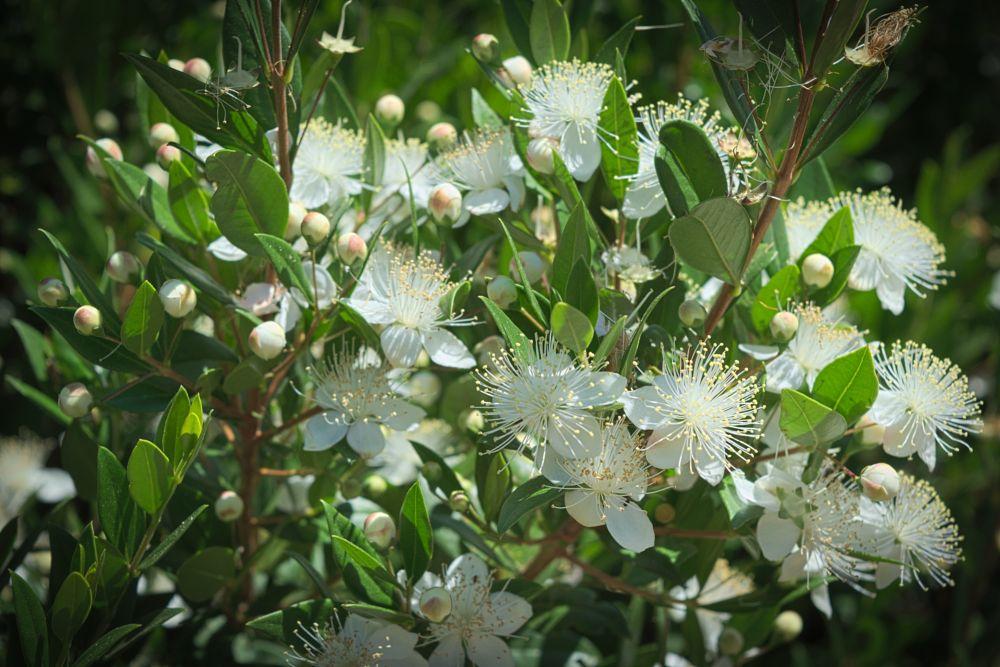 Photo in Nature #flowers #wildflowers #nature