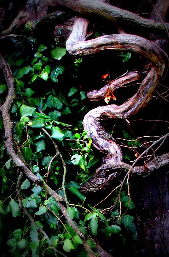 Photo in Nature #// #346 #ph