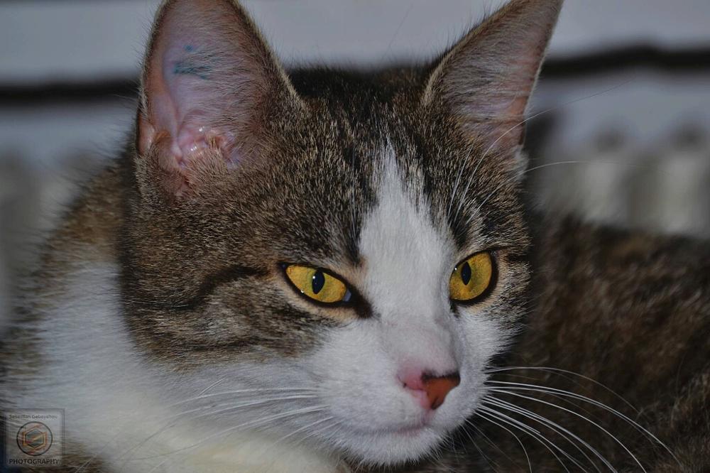 Photo in Animal #katze #tiere #haustier #pats #animal #cat
