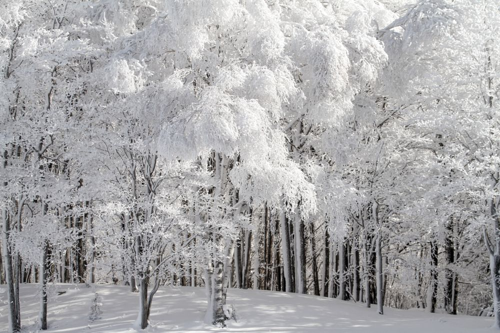 Photo in Landscape #landscape #winter #snow #trees #white on black #forest #bush #shadows #storms