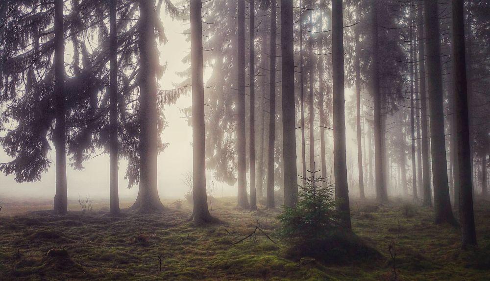 Photo in Nature #oberfranken #fichtelgebirge #forest #fog #thoughts