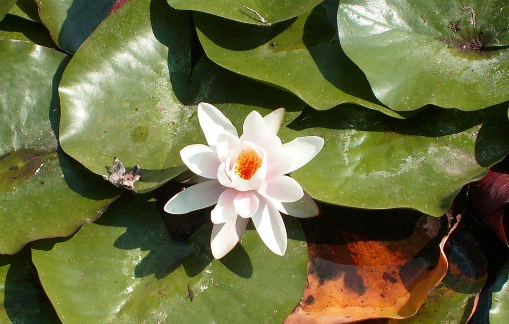 Photo in Random #fiori #acqua #natura