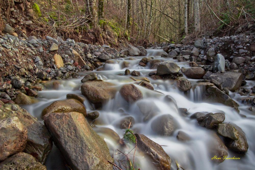 Photo in Landscape #water #rapids #white water #rocks #pebbles #wet rocks #trees #forest