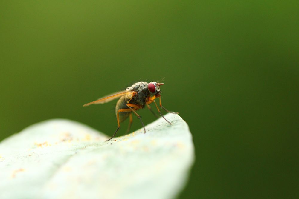Photo in Macro #fly #macro #nature
