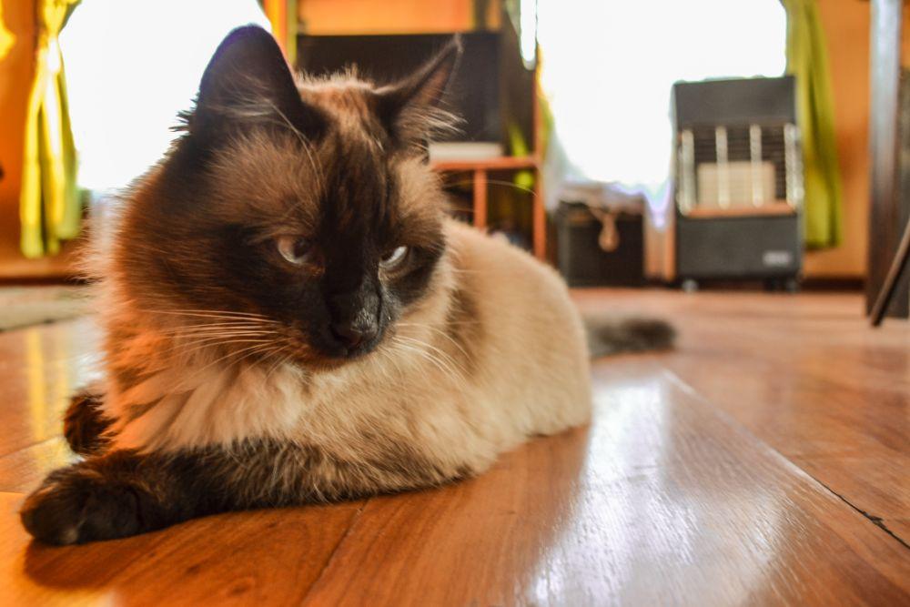Photo in Animal #jco #jean #jeancristianoliva #jeanchristianoliva #youpic #inspiration #cat #gato #crema #byn
