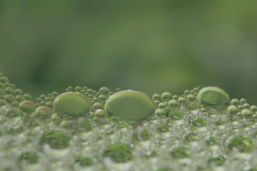 Photo in Macro #macro #water #oil