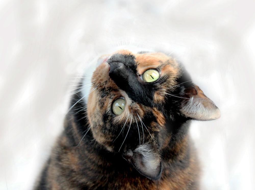 Photo in Random #youpic #beautiful #photography #sweet #nice #cat #lovely #denmark