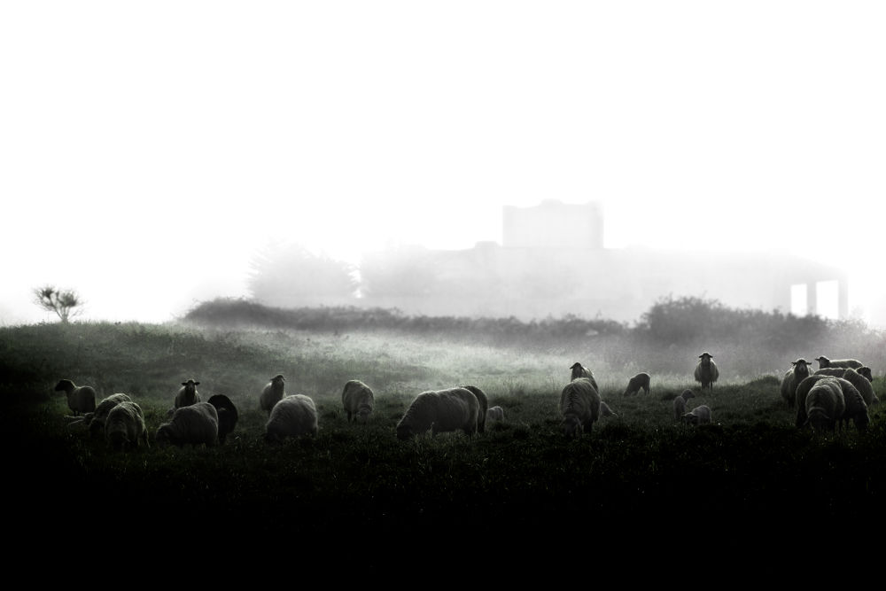 Photo in Random #sheep #mist