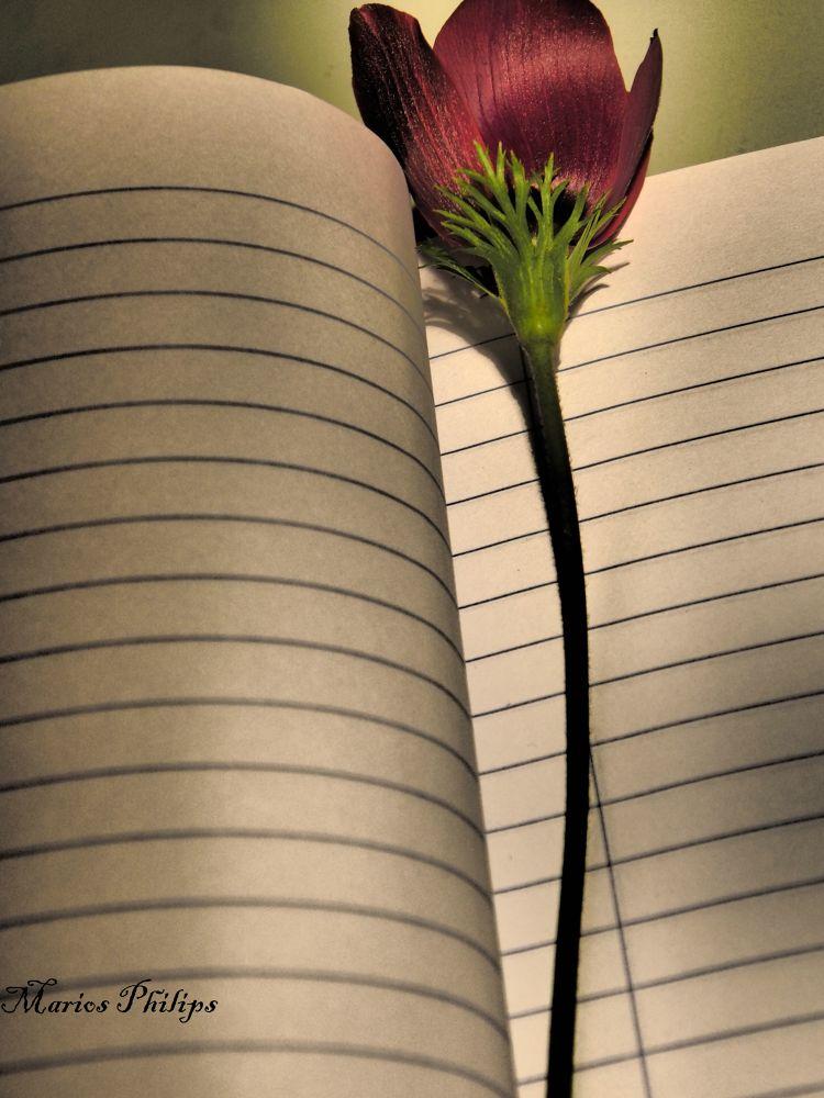 Photo in Random #flower #cyprus #notebook