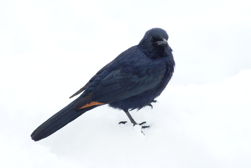 Photo in Animal #bird #nature #africa #snow