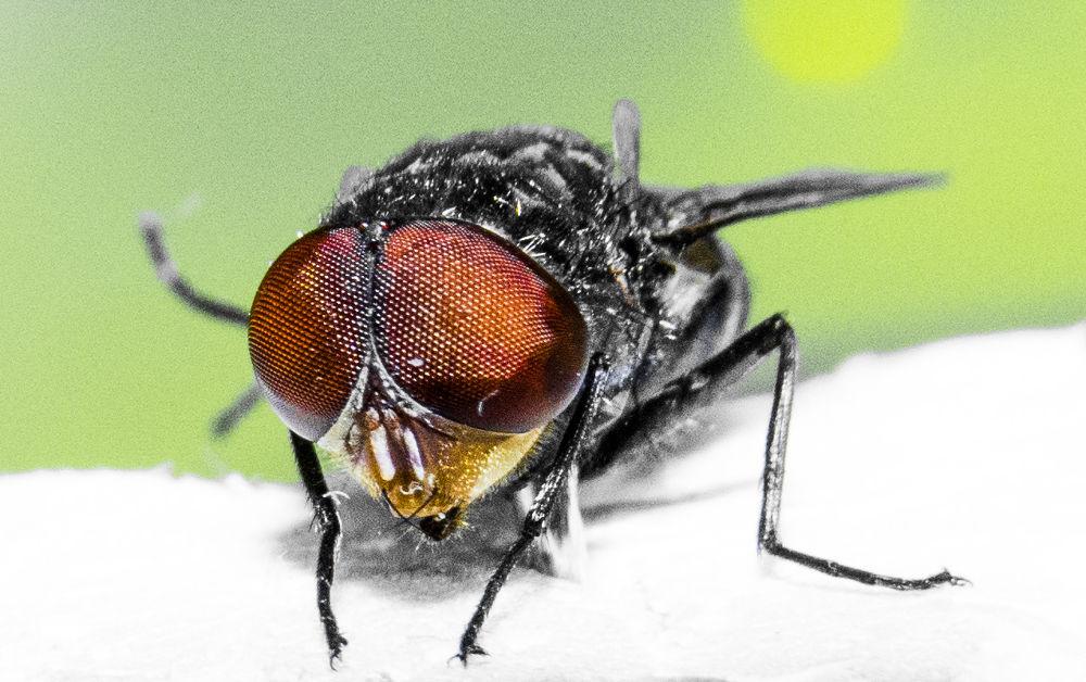 Photo in Animal #bangladesh #macro