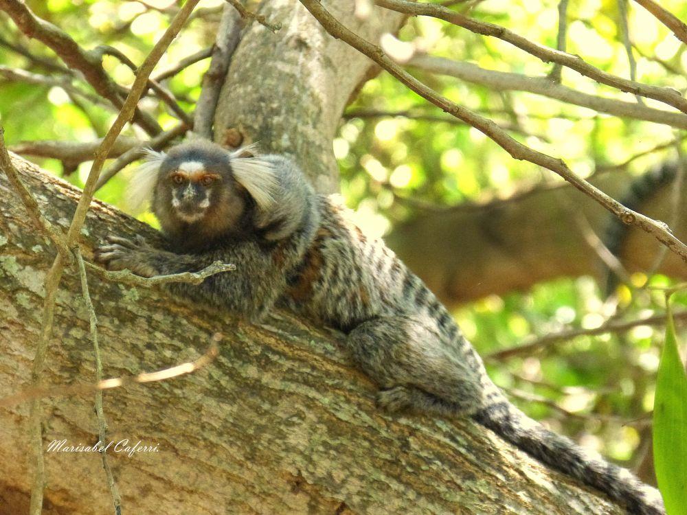 Photo in Animal #mono de imbassai imbassai sa
