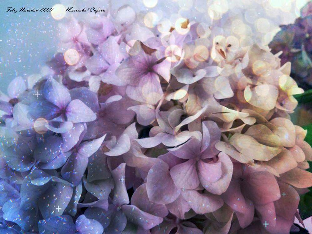 Photo in Fine Art #bellas flores magia de navida