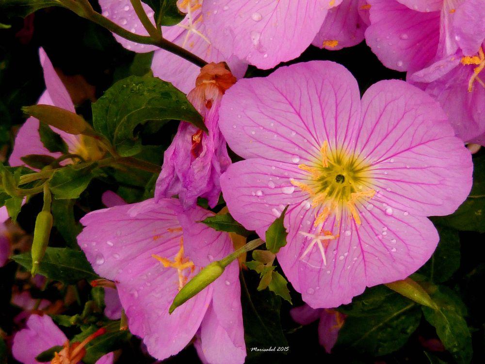 Photo in Travel #flores en primavera  bellas