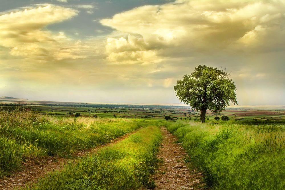 Photo in Nature #nature #yellow #sun #green