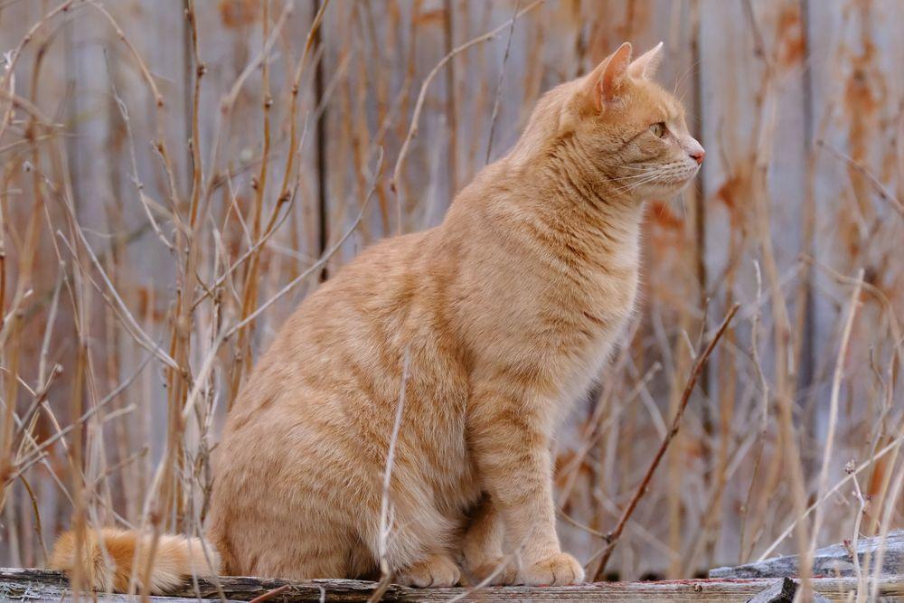 Photo in Animal #cat #pet #kitten #springtime #birdwatching #observing #katt #vårdag #fujifilm