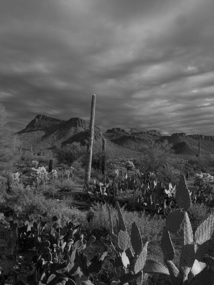 Photo in Black and White #clouds #sky #desert #cactus