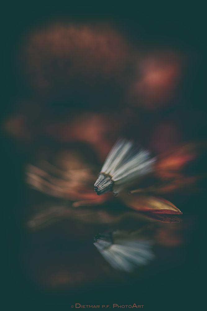 Photo in Still Life #still life #dof #bokeh #nikon