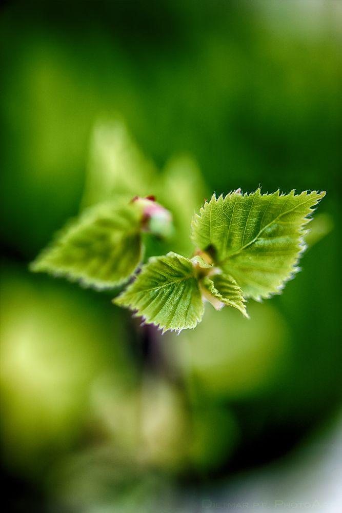 Photo in Nature #spring #green #dof #bokeh #nikon
