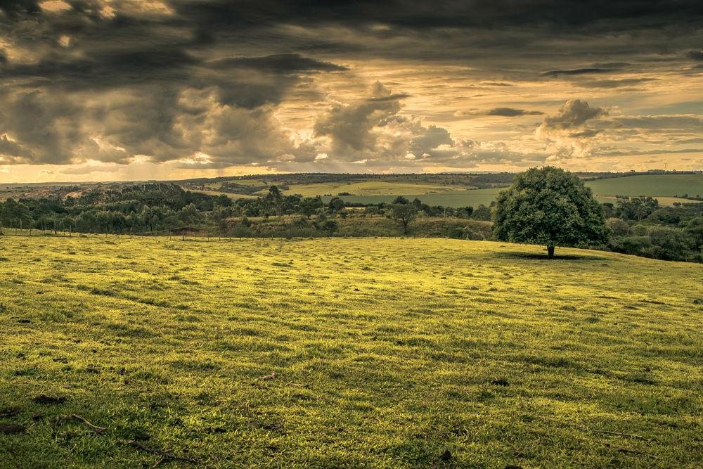 Photo in Landscape #itapetininga #cinestudio #tree #field #cloud #hdr