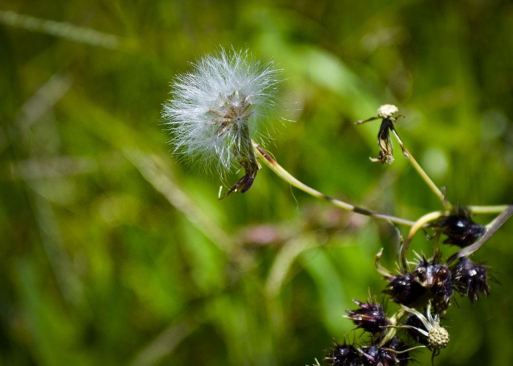 Photo in Nature #nature #natureza